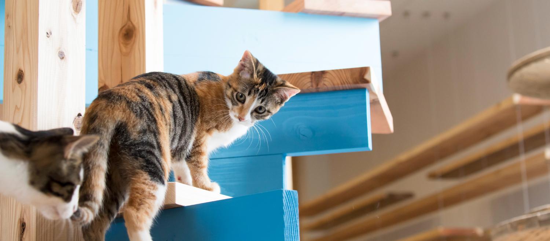BLUE CAT CAFE(ブルーキャットカフェ) | 岡山の里親探し型猫カフェ